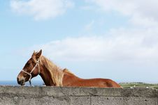 Free Brown Horse Beside Grey Concrete Wall Under White And Blue Sky During Daytime Stock Images - 84935174