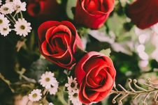 Free Rose Blossoms Stock Photo - 84935310