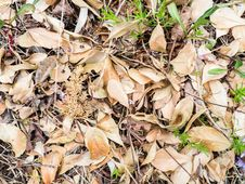 Free Dry Leaves And Twigs On Ground Stock Images - 84935544