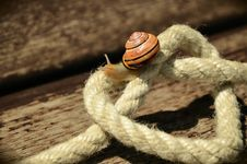 Free Snail On White Square Knot Rope Stock Images - 84935634