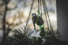 Free Bird On Bird Feeder Stock Photos - 84935803