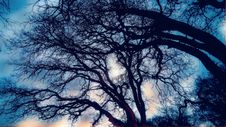 Free Bare Branches Of Trees In Winter Stock Image - 84935941
