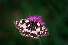 Free Tilt Shift Photography Of Black And White Butterfly Royalty Free Stock Images - 84937419