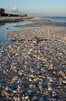 Free Shells To The Horizon.. And Beyond Stock Photo - 84937440