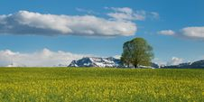 Free Green Leaves Tree On Green Grass Field Royalty Free Stock Photos - 84937548