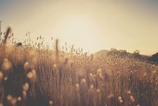Free Focus Photography Of Grassy Field At Daytime Royalty Free Stock Image - 84937816