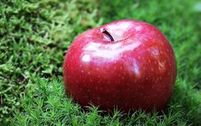 Free Shallow Focus Photography Of Red Apple In Green Grass Royalty Free Stock Photography - 84937827