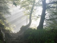 Free Sunbeams In Forest Stock Images - 84938054