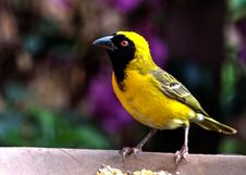 Free Bird Perching On Outdoors Royalty Free Stock Photography - 84939067