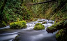 Free Creek In Forest Stock Photography - 84939302