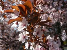 Free White And Maroon Flowers Stock Image - 84939351