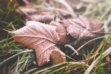 Free Fall Leaves Stock Images - 84939654