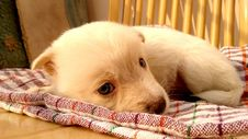 Free Puppy Sleeping On Blanket Royalty Free Stock Images - 84940169