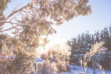 Free Frozen Trees Royalty Free Stock Image - 84940336
