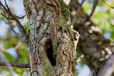 Free Tree Closeup Royalty Free Stock Photo - 84942975