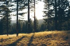 Free Clearing In Evergreen Forest Royalty Free Stock Photos - 84944138