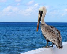 Free Pelican By Sea Stock Photos - 84944743