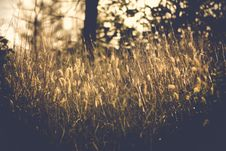 Free Grasses In Sun Royalty Free Stock Photos - 84944838