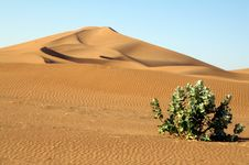 Free Lonely Plant In The Desert Stock Image - 84946051