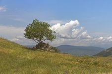 Free Like A Tree Royalty Free Stock Photo - 84948745