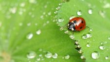 Free Ladybug Expedition Royalty Free Stock Photos - 84949018