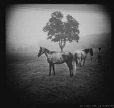 Free Two Horses In Fog Stock Photo - 84950310
