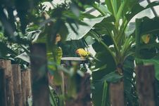 Free Exotic Parrots Royalty Free Stock Photos - 84950998