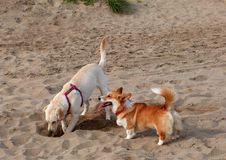 Free Puppy Beach Party! Royalty Free Stock Images - 84951399