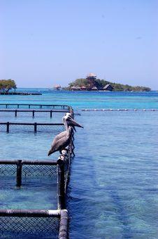 Free Pelicans In Cartagena Aquarium Royalty Free Stock Photography - 84954047