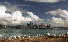 Free Beach Birds Stock Photos - 84954523