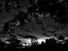 Free Silhouette Of Trees At Night Stock Photography - 84955432