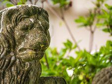 Free Lions Of Vancouver --eastvan-photowalk-vancouver-em10-75-300mm-20150517-P5170027 Stock Photos - 84955603