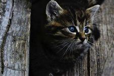 Free Kitten Portrait Stock Image - 84956131