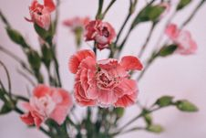 Free Bunch Of Pink Flowers Stock Photo - 84956480