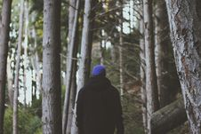 Free Rear View Of Man In Forest Royalty Free Stock Images - 84957219