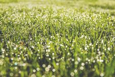 Free Dew Drops On Field Of Grass Stock Photo - 84957620