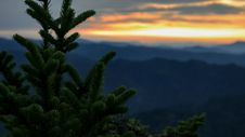 Free Conifer Tree And Sunset Royalty Free Stock Photos - 84958408