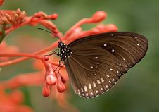 Free Black And White Butterfly On Red Flower Stock Images - 84959384
