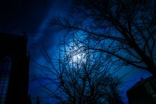 Free Moon Behind Trees Royalty Free Stock Photo - 84959785