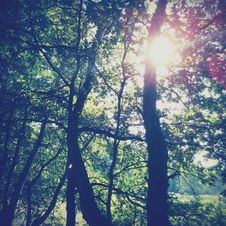 Free Sunlight Streaming Through Trees Royalty Free Stock Photos - 84959868