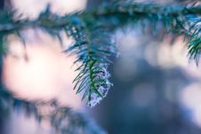 Free Frost On Tree Branch Stock Images - 84959964