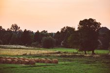 Free Hay Bales In Field Stock Photo - 84962030