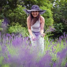 Free Mom Picking Lavender Royalty Free Stock Images - 84962579