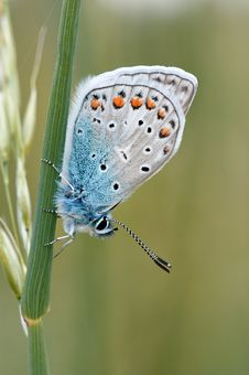 Free White Brown Black And Blue Butterfly Standing In Green Plant Stock Image - 84963101