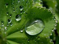 Free Water Drops On Leaf Stock Photos - 84964153