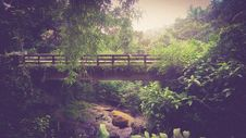 Free Bridge In Forest Stock Photography - 84964722