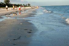 Free Beach Scavengers Stock Photos - 84966883