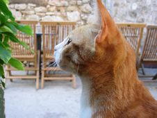 Free Side View Of Orange Tabby Looking At Green Plant Stock Images - 84968534