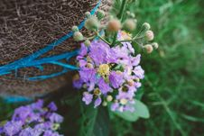 Free Wildflowers Stock Image - 84970211