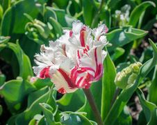 Free White And Red Flower During Day Time Royalty Free Stock Images - 84970239